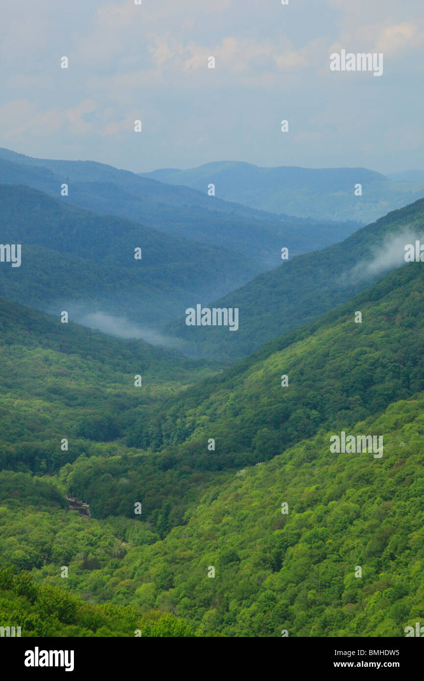 View of Red Creek Canyon from Rohrbaugh Trail, Dolly Sods Wilderness, Hopeville, West Virginia - Stock Image