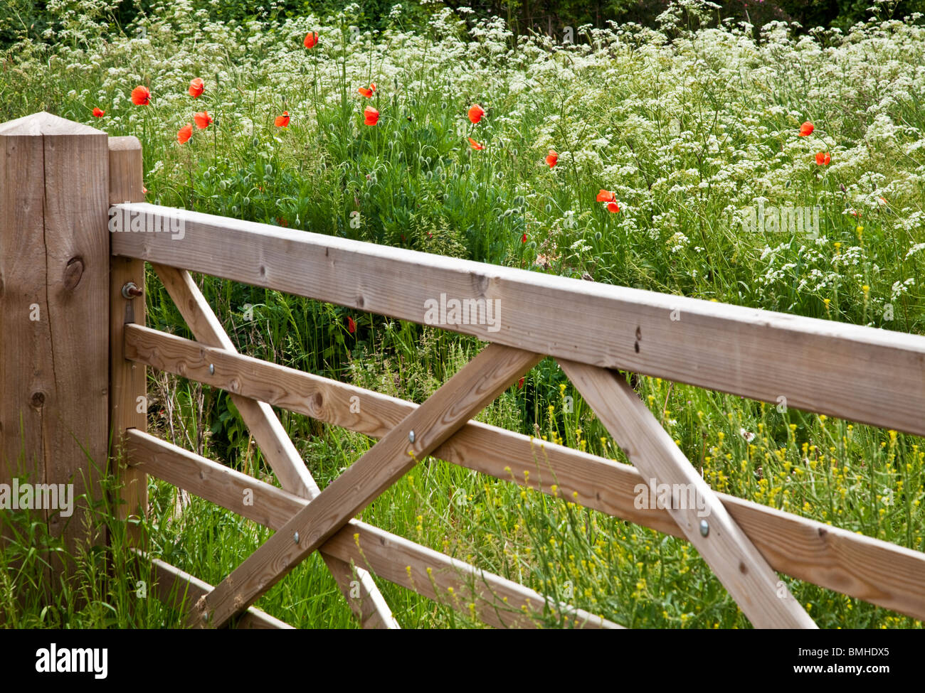 Wooden five-barred gate into a field of cow parsley and wild red poppies in typical English summer countryside. - Stock Image