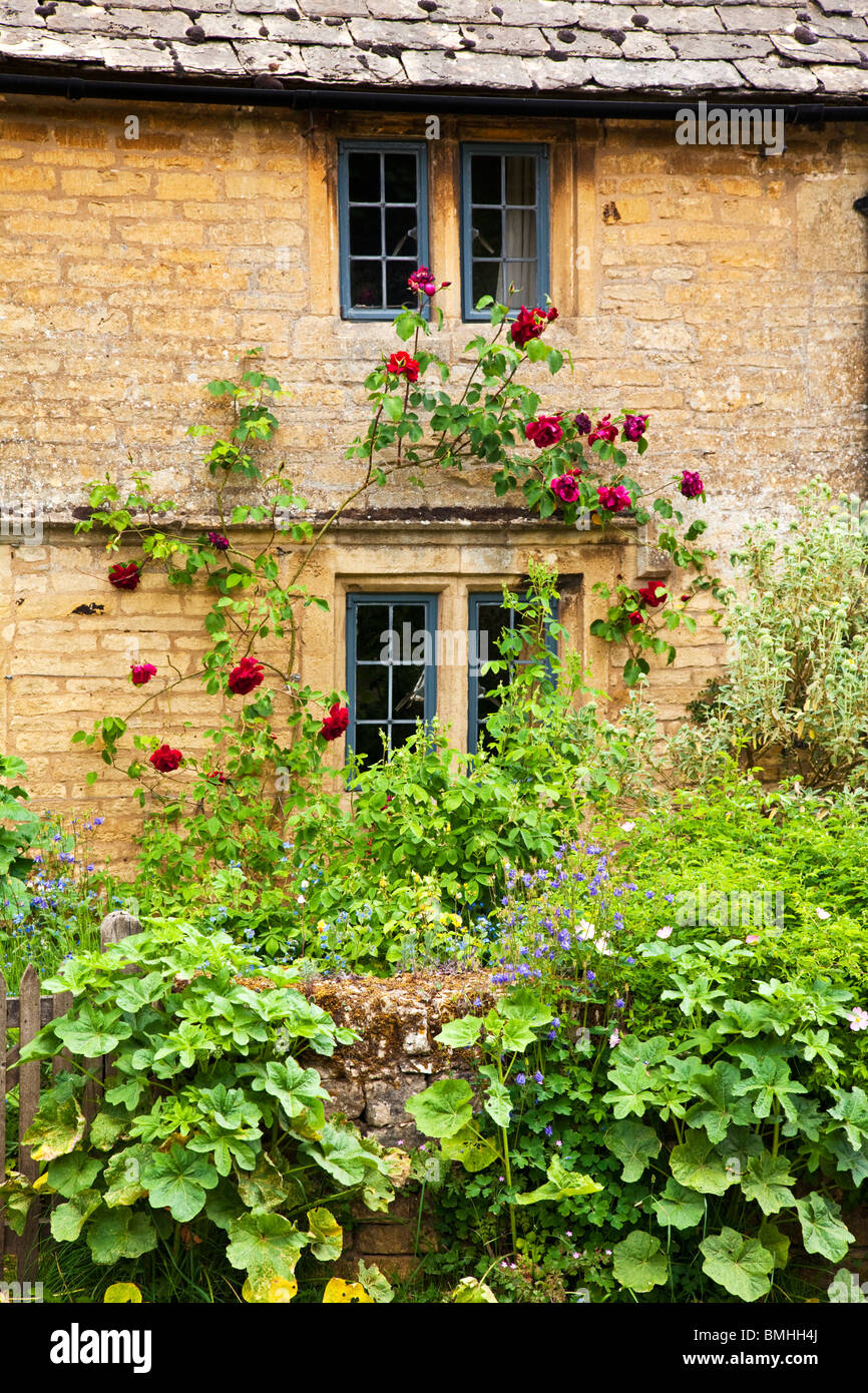 A charming Cotswold cottage mullioned window with leaded lights and red rambling rose with pretty front garden - Stock Image