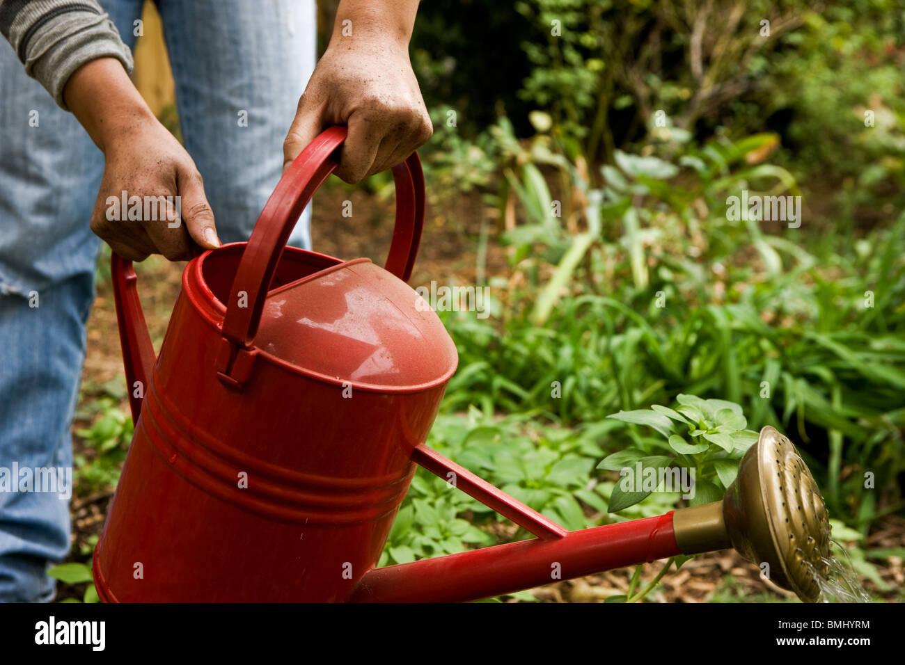 Watering the garden - Stock Image