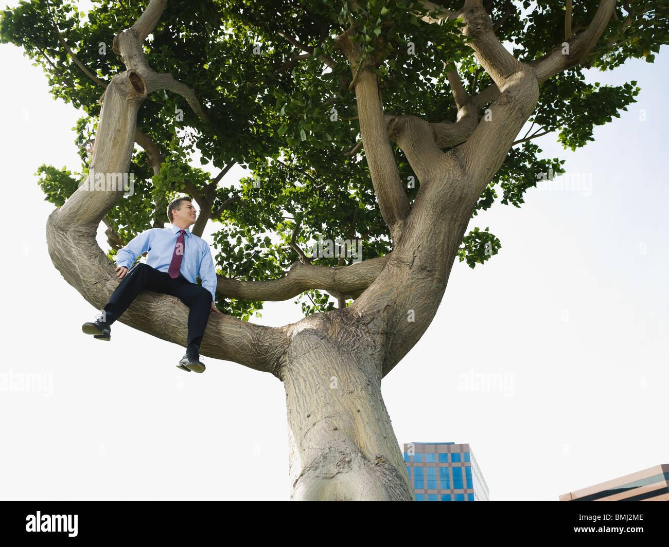 Businessman sitting in tree - Stock Image