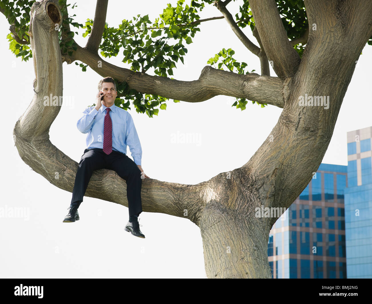 Businessman sitting in tree - Stock Image
