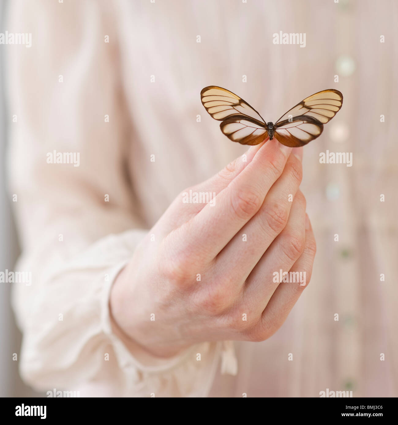 Hand holding butterfly - Stock Image