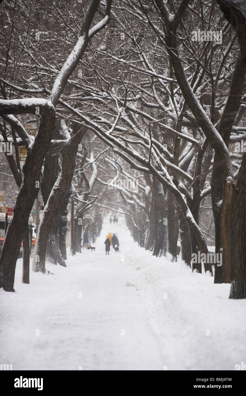 Tree lined path covered in snow - Stock Image