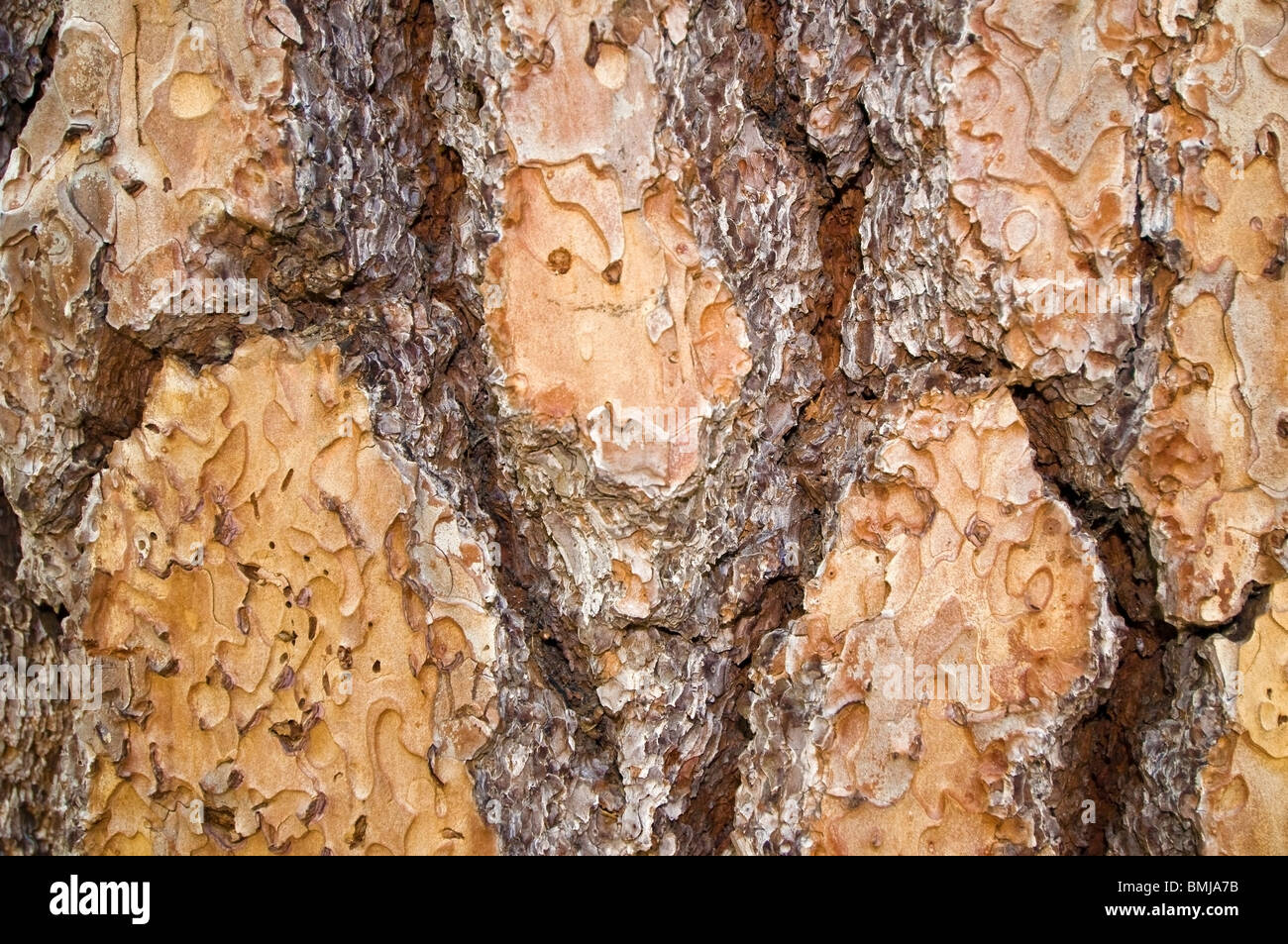Tree Bark - Stock Image