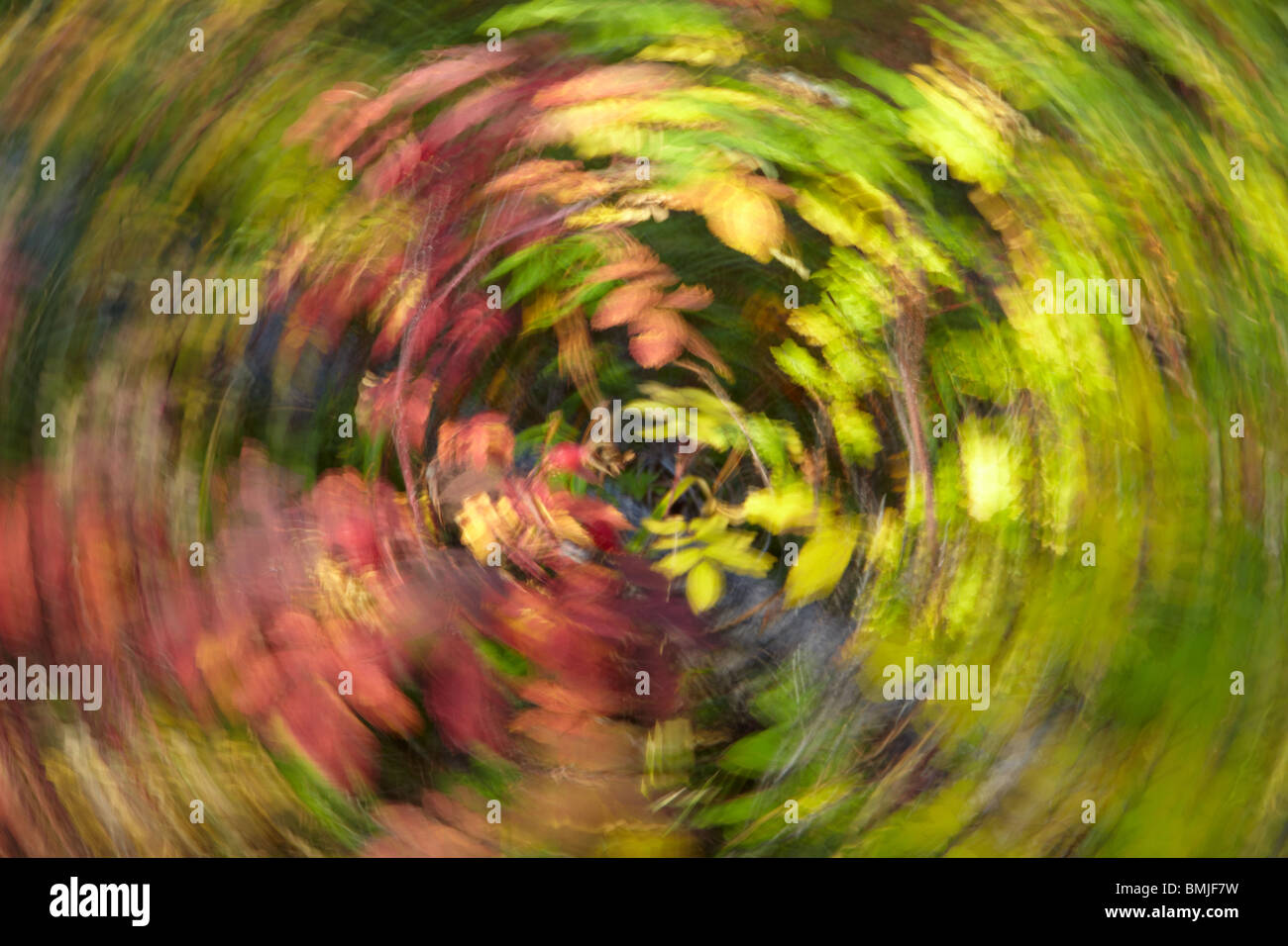 circular motion blur on the autumn colours, Jasper National Park, Alberta, Canada - Stock Image