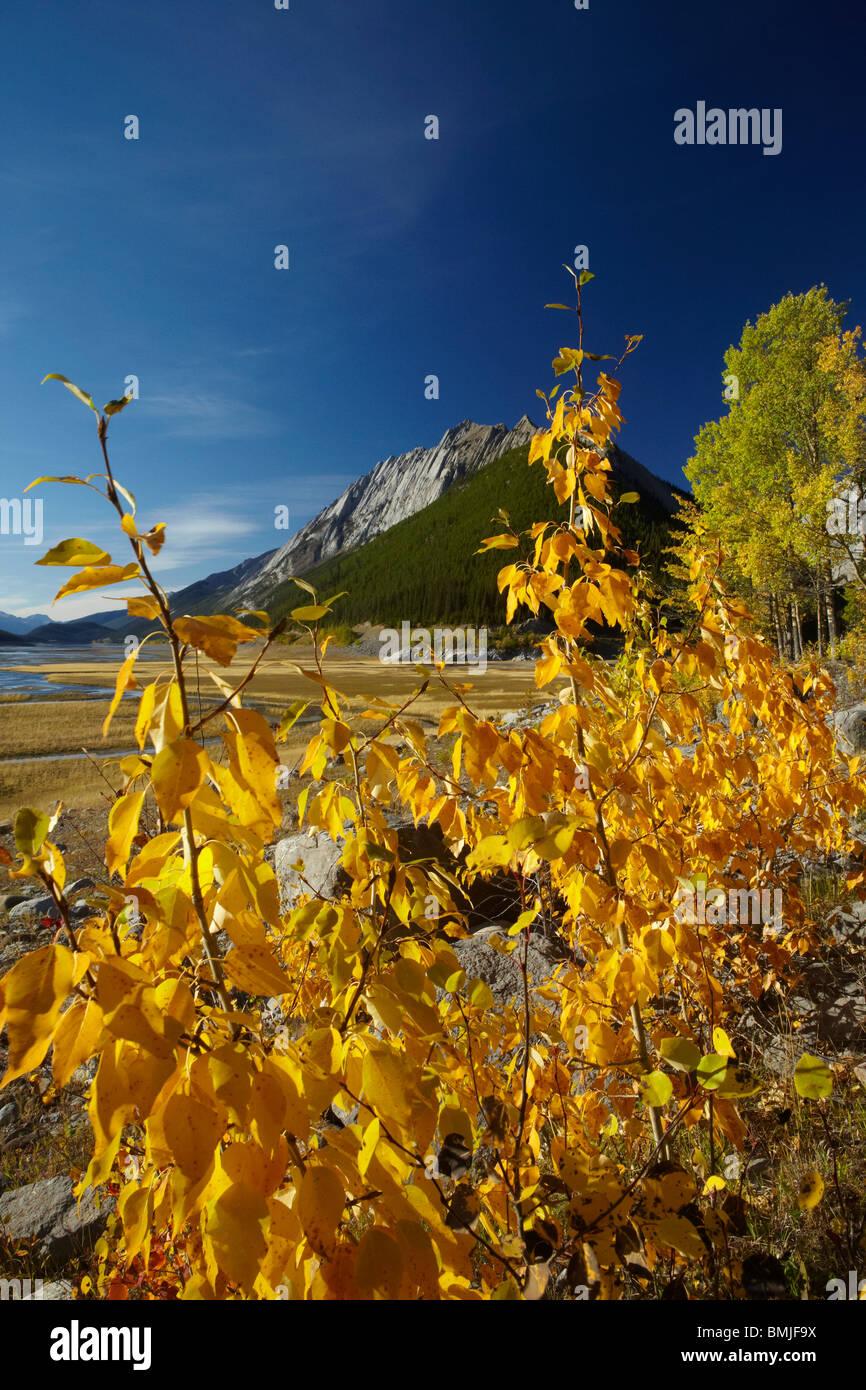 autumn colours, Beaver Creek area, Maligne Valley, Jasper National Park, Alberta, Canada - Stock Image