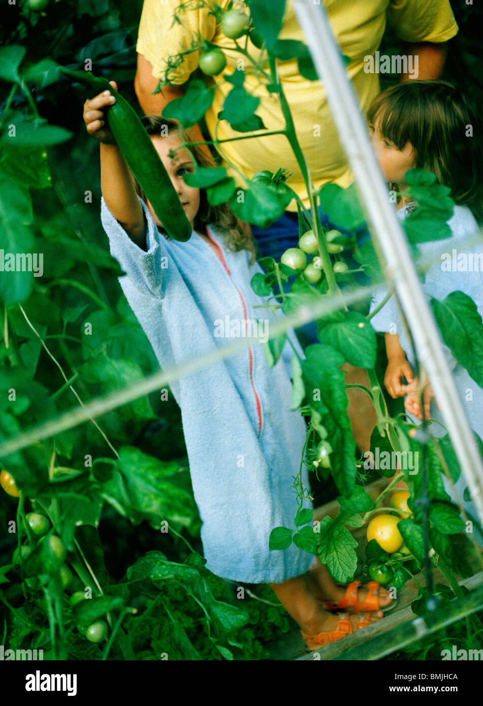 Children and one grownup in a glasshouse, Sweden. - Stock Image