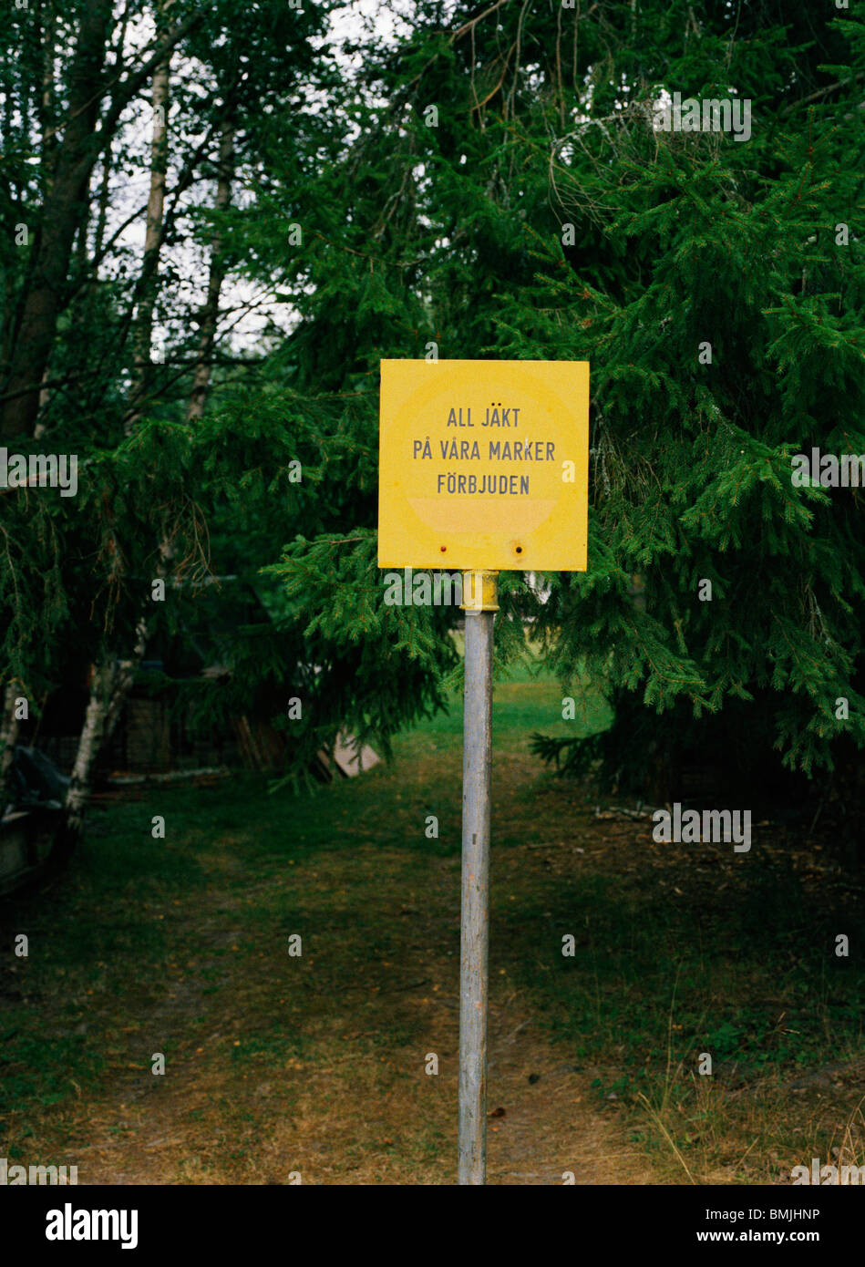 A yellow sign in front of a fir, Sweden. - Stock Image