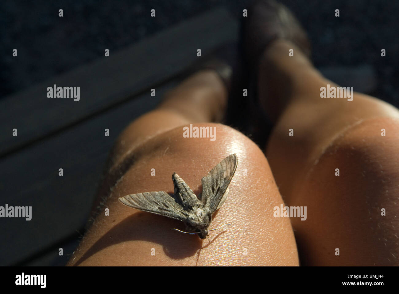 Butterfly on human leg, close-up - Stock Image