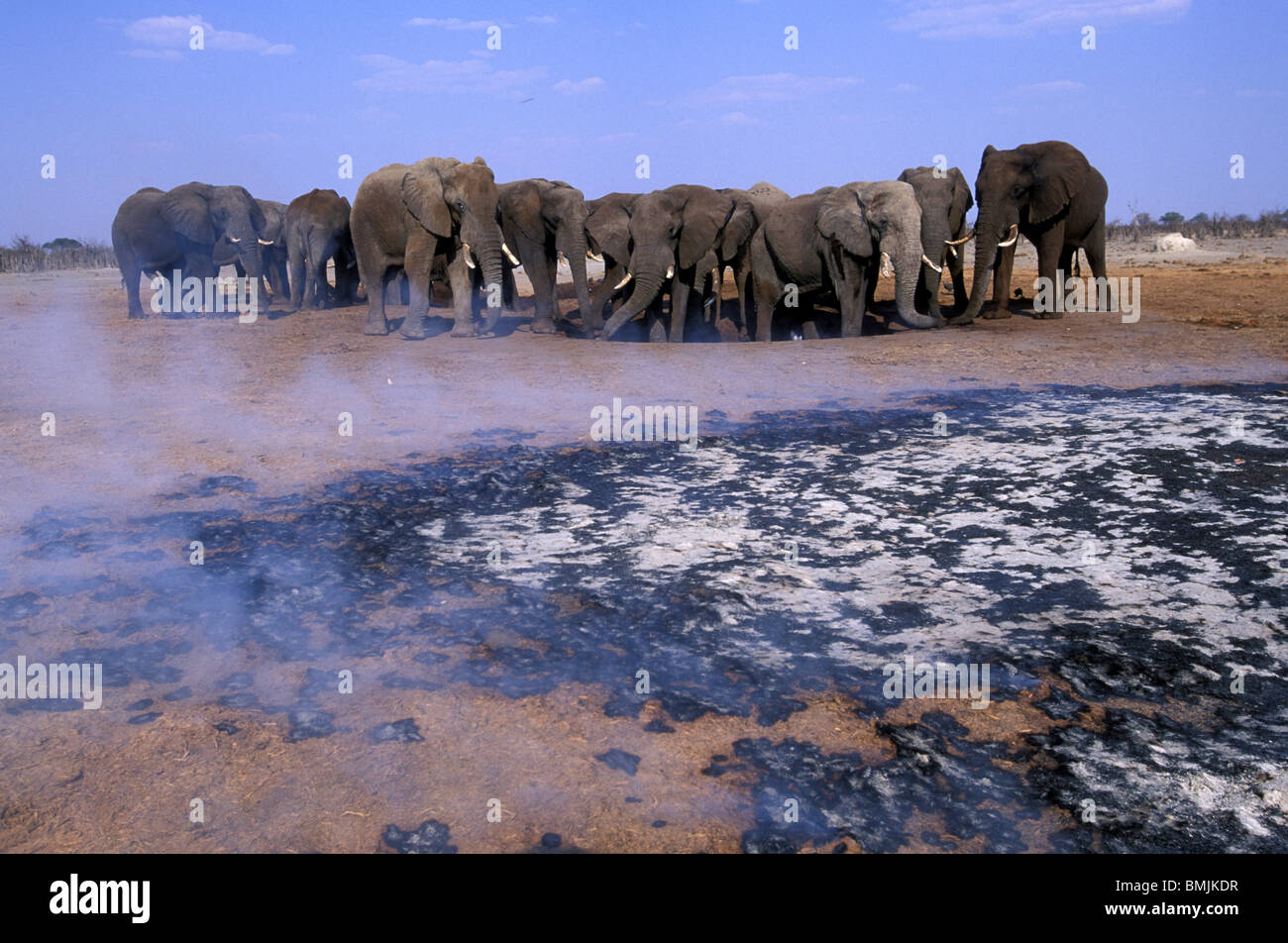 Botswana, Chobe National Park, Elephant herd (Loxodonta africana) and smoldering fire during dry season in Savuti - Stock Image
