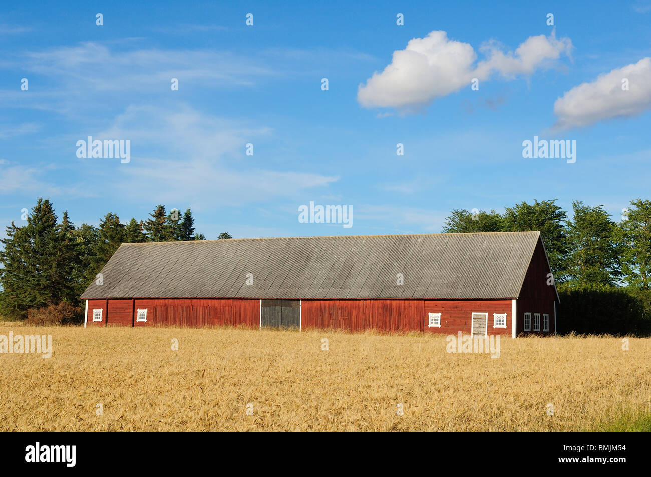 Scandinavian Peninsula, Sweden, Ostergotland, Barn in field - Stock Image