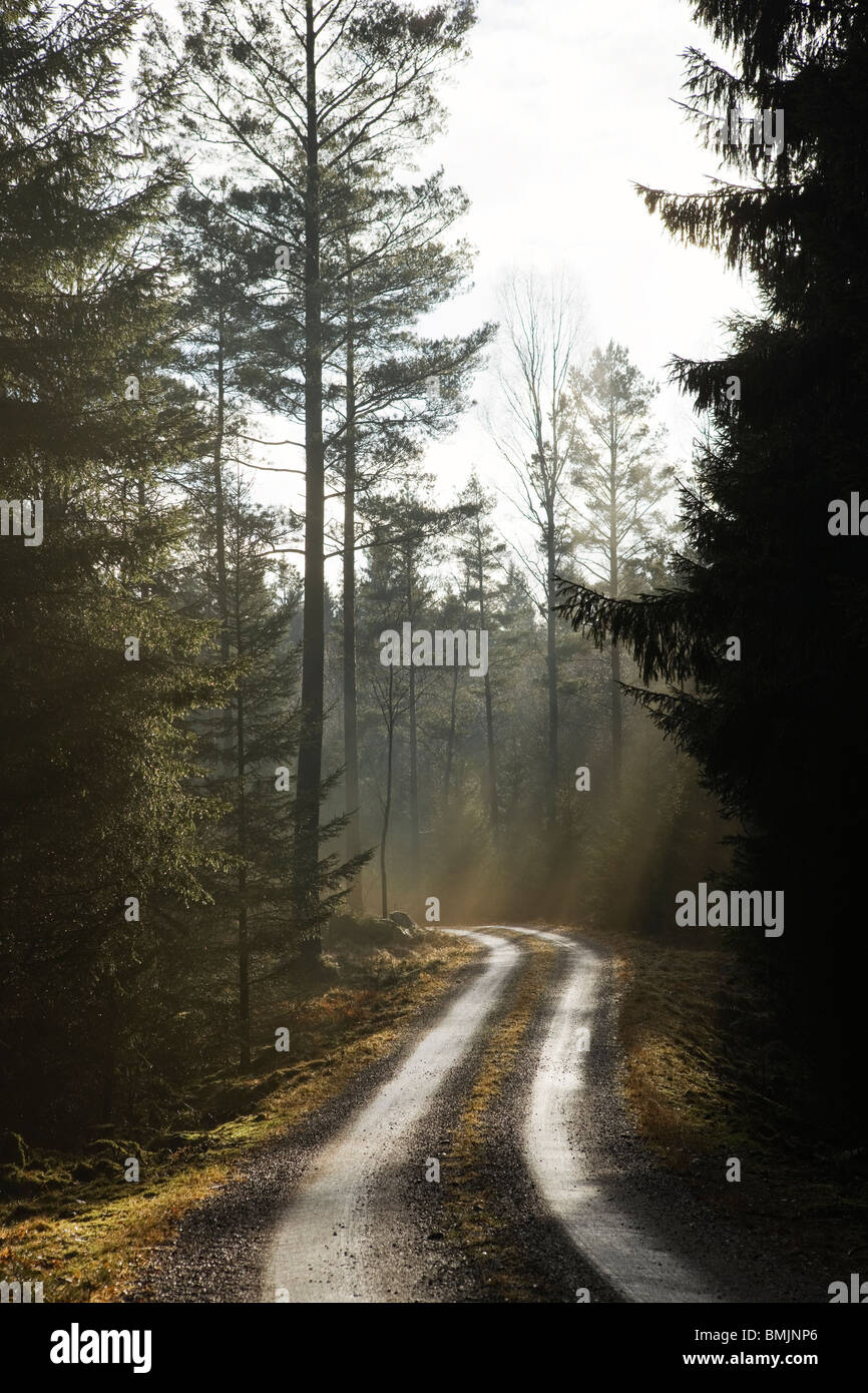 Scandinavian Peninsula, Sweden, Skane, View of empty dirt track passing through forest - Stock Image