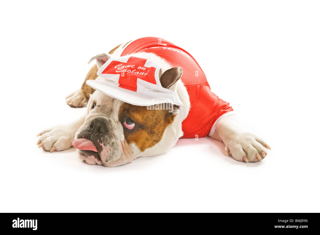 A British Bulldog lying down wearing an England team football shirt and cap against a white background looking quite - Stock Image