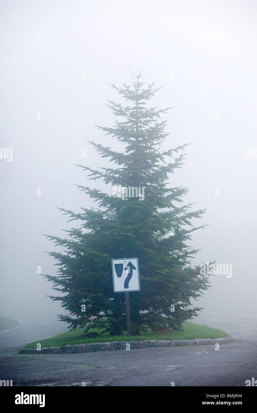 Traffic sign in front of a spruce - Stock Image