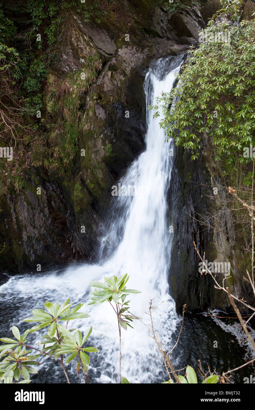 Famous Welsh Waterfall at Devil's Bridge spilling into the Devil's punchbowl or cauldron - Stock Image