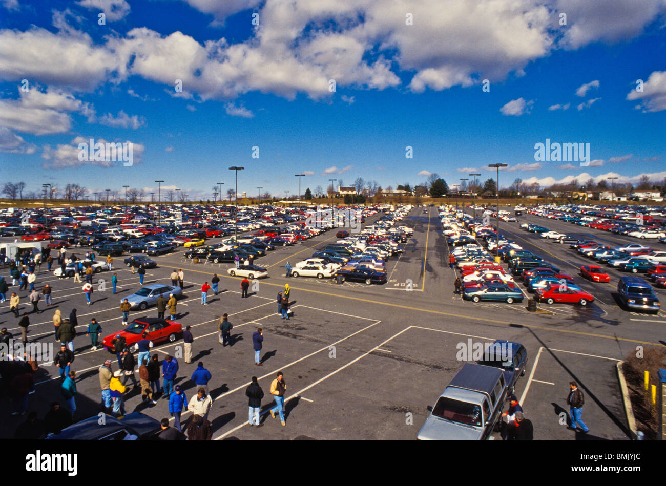 View of used automobiles at Manheim Auto auction, world's