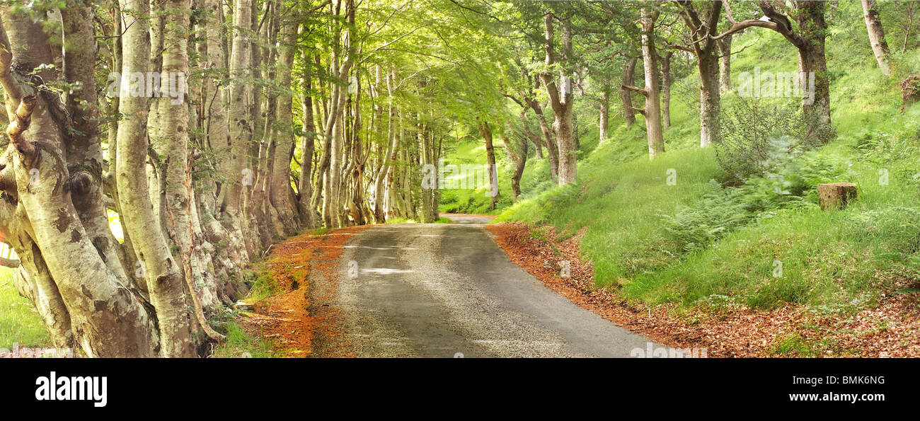 Summer view of a woodland walk. - Stock Image
