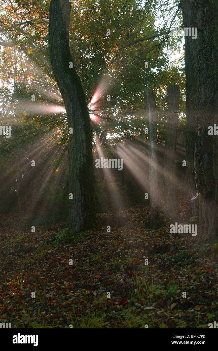 Magic forest - Stock Image