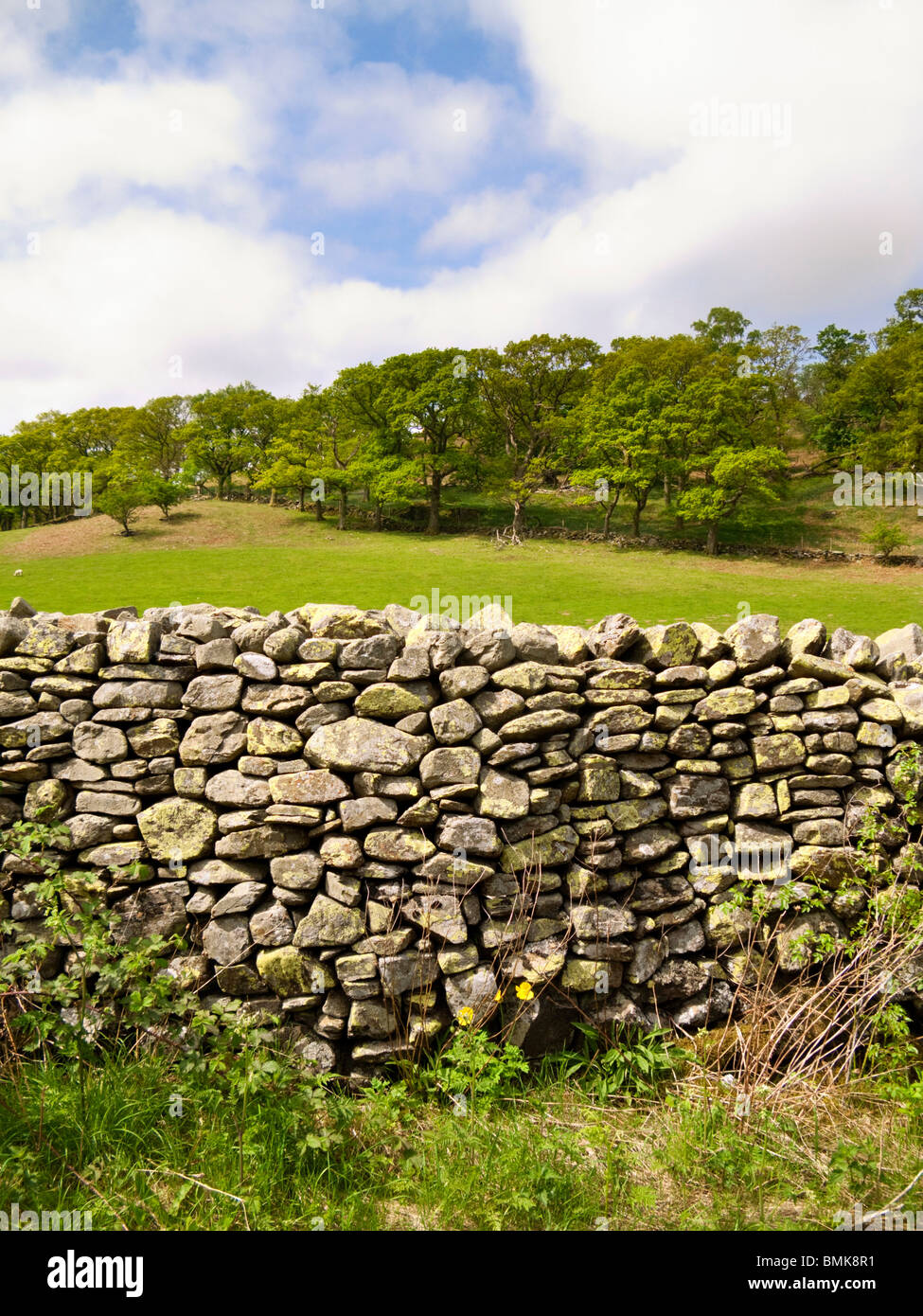Rustic dry stone wall and field in the Lake District, England, UK - Stock Image