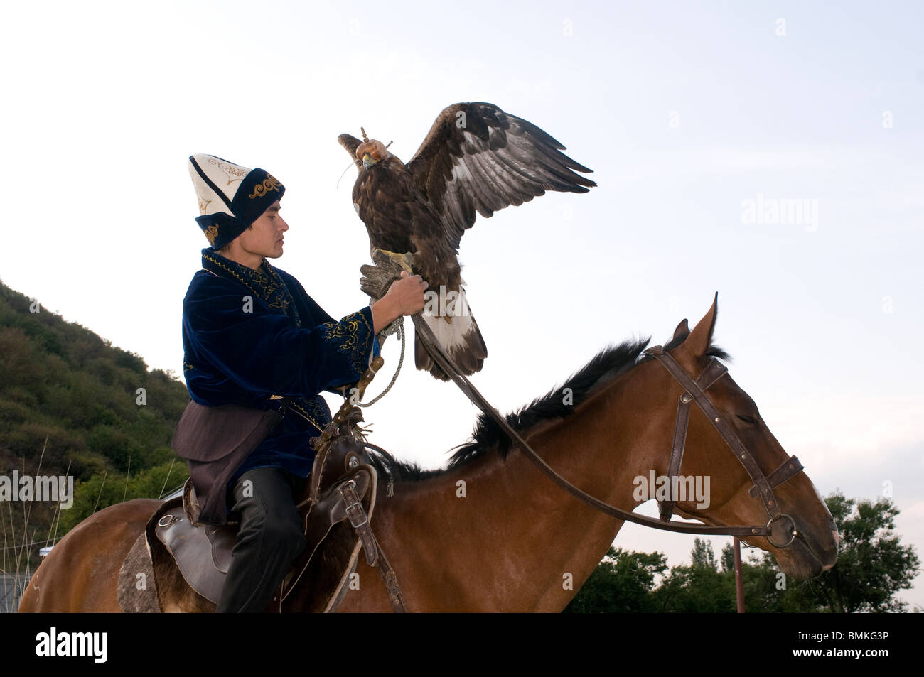 Man is showing a falcon flight at the Suncar Falcon farm, Alma Ata, Kazakhstan - Stock Image