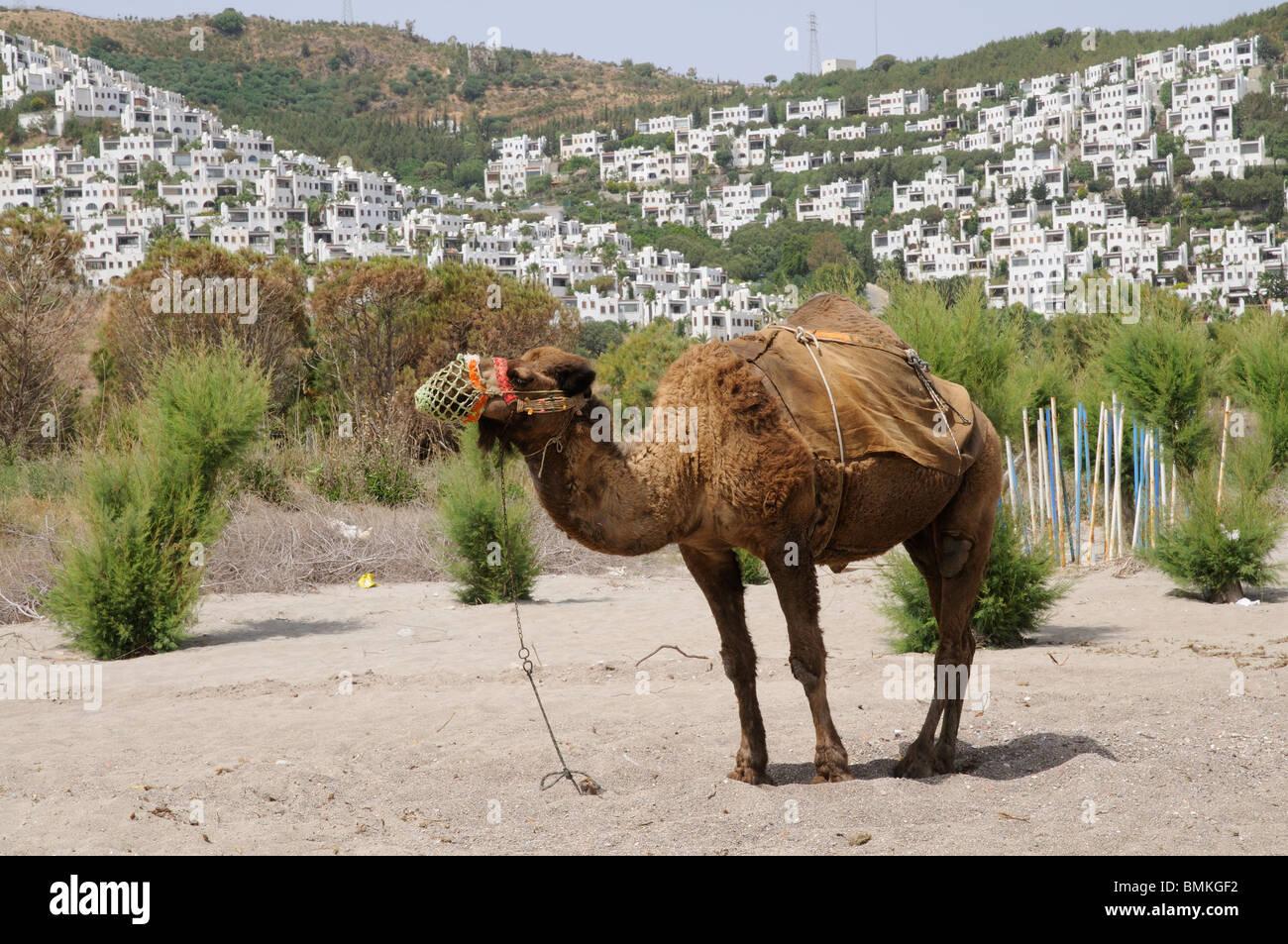 Camel Beach a seaside resort close to Bodrum south west Aegean Turkey Asia Minor - Stock Image