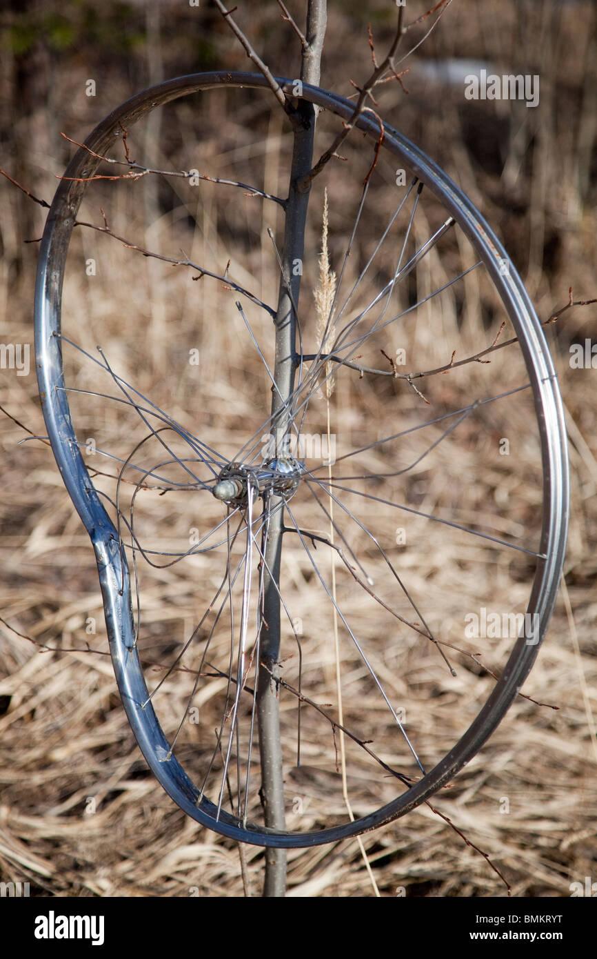 Broken bicycle rim hanging on tree branch - Stock Image
