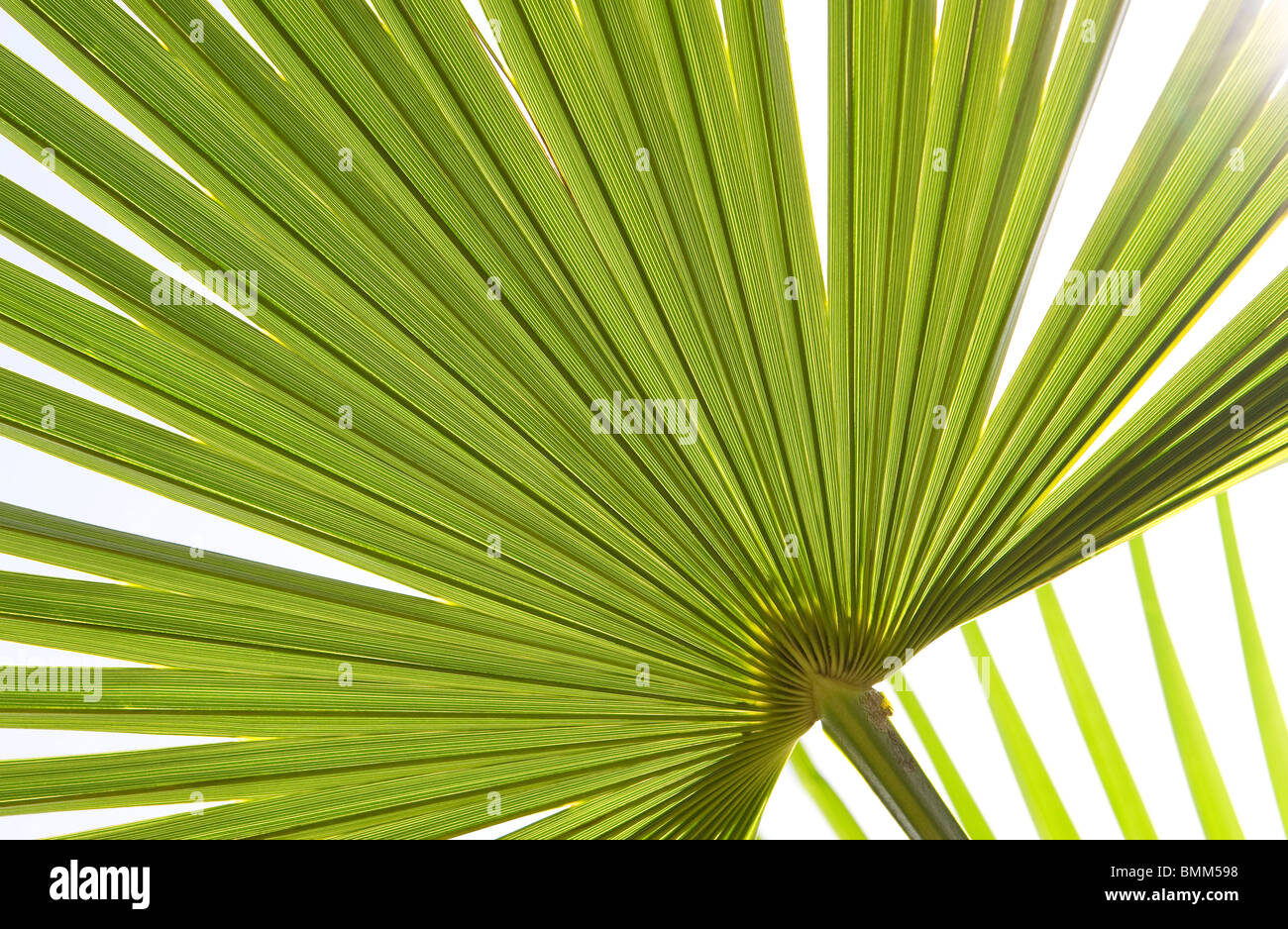 green palm leaf abstract pattern - Stock Image