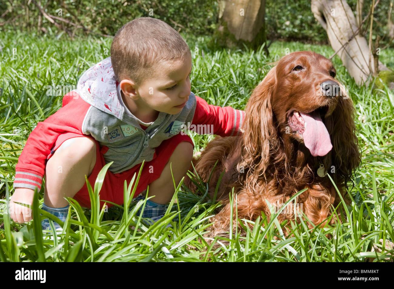 little boy petting irish setter dog in woods Stock Photo