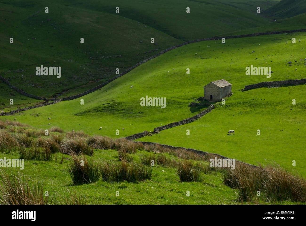 Field barn near Darnbrook Farm, Malham Moor, Yorkshire Dales National Park, England UK - Stock Image