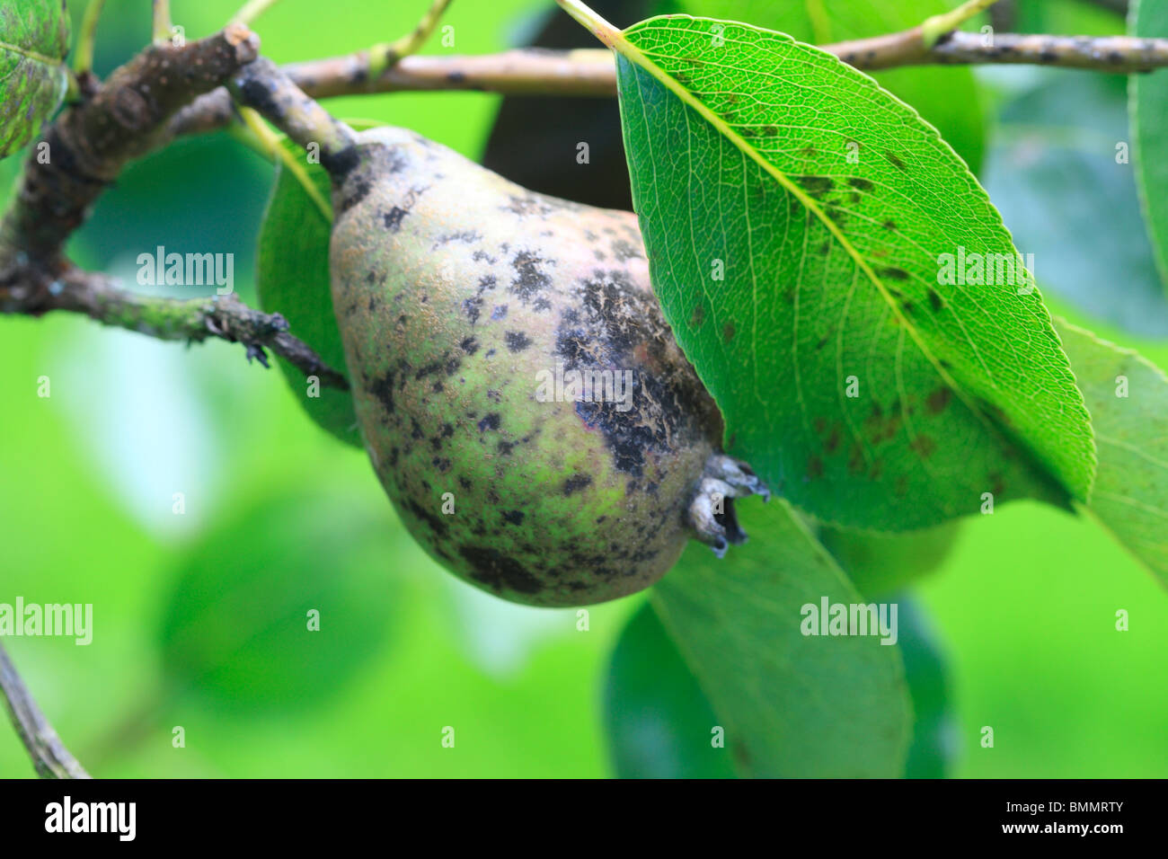 Scab Stock Photos & Scab Stock Images - Alamy