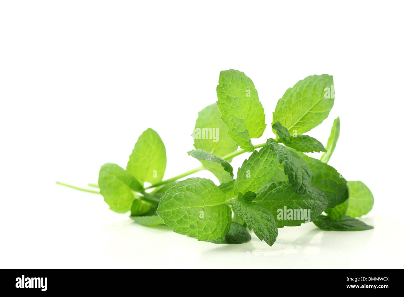 Fresh mint leaves isolated on white. - Stock Image