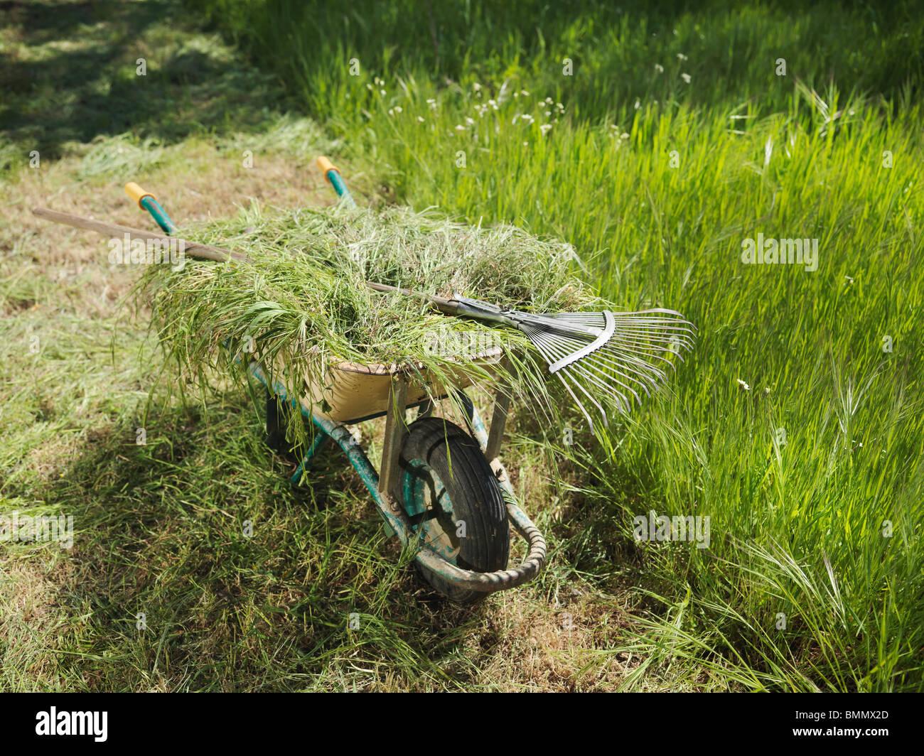 Wheelbarrow full of hay and rake - Stock Image