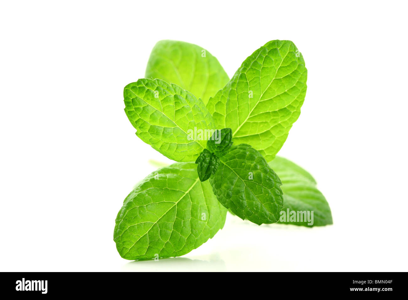 Fresh mint leaves isolated on white. - Stock Image