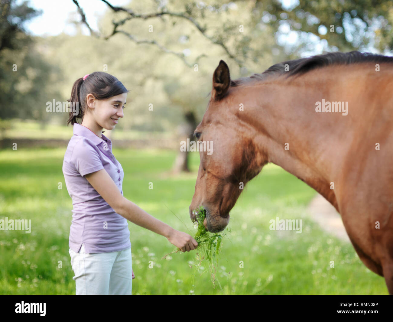 Girl giving grass to horse - Stock Image