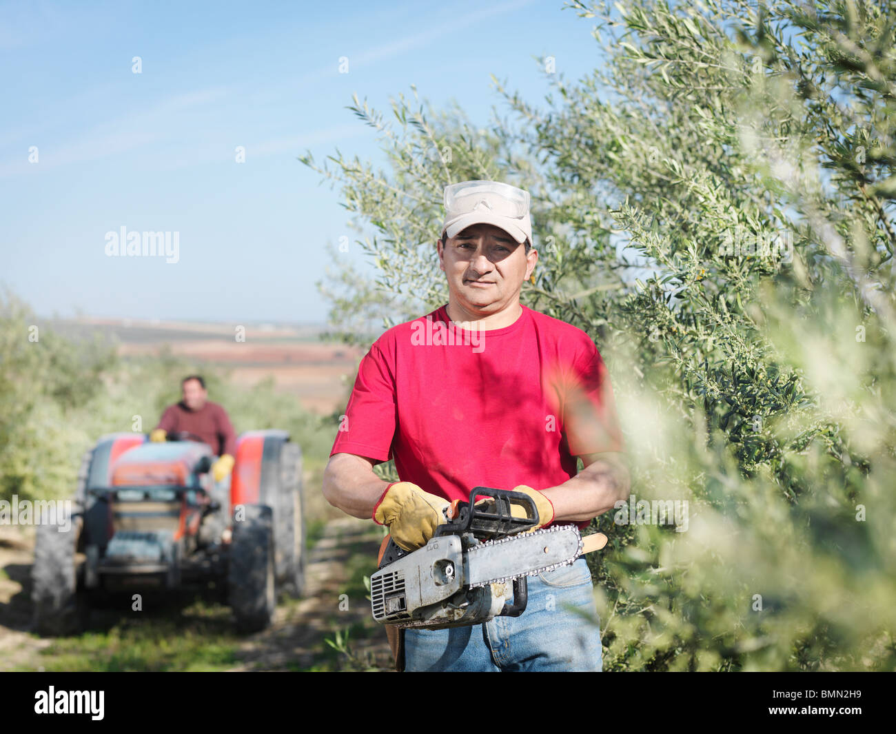 Man with chain saw in olive grove - Stock Image