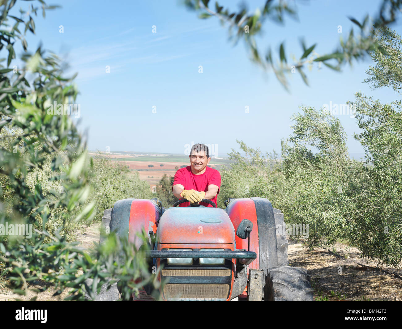 Man on tractor in olive grove - Stock Image