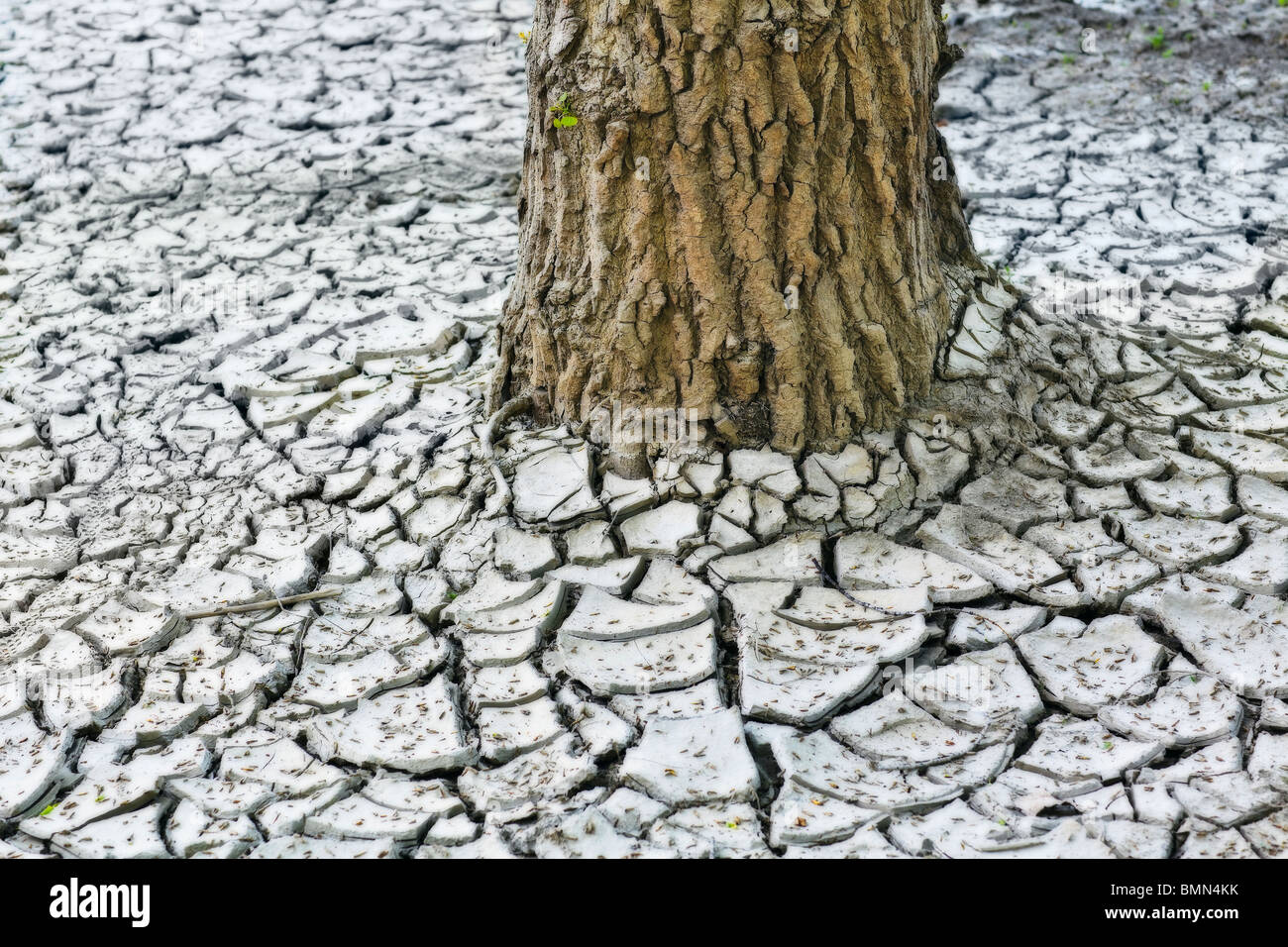 Dry cracked clay earth and a tree trunk.  Red River Valley, Winnipeg, Manitoba, Canada. - Stock Image