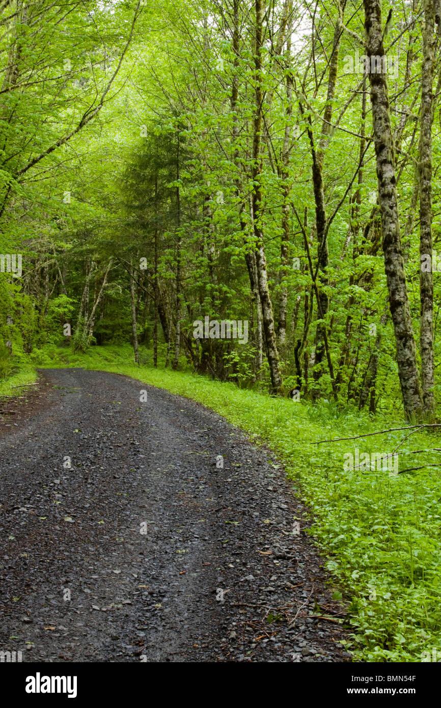 The Road Less Taken - Stock Image