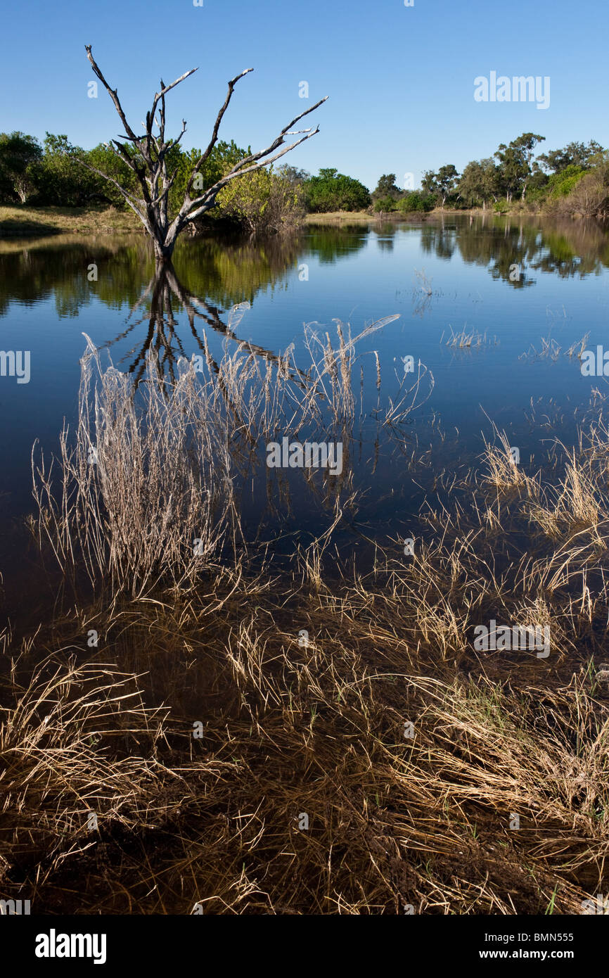 The newly flooded Savuti Channel in Northern Botswana. Stock Photo
