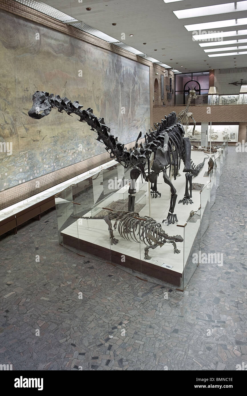 Paleontology museum in Moscow. Russia - Stock Image