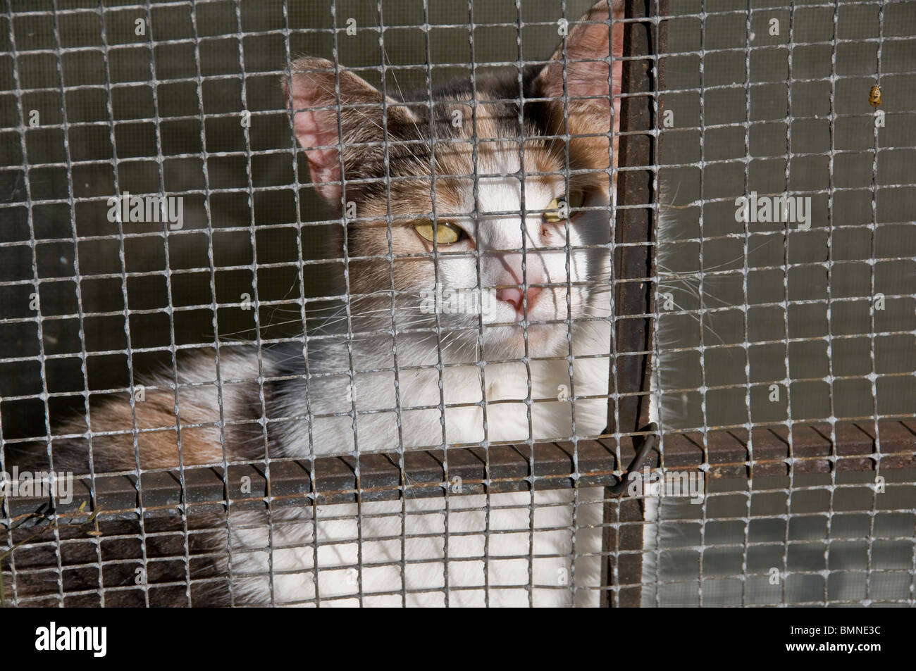 Cat in a cage - Stock Image