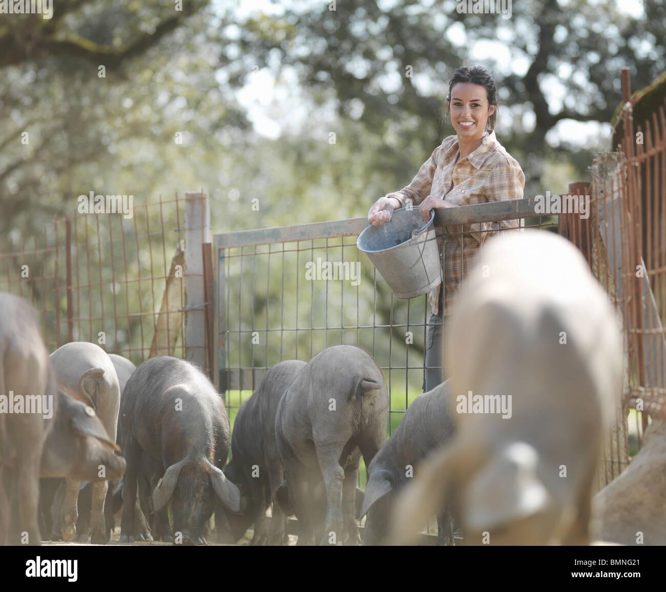Woman on farm feeding pigs - Stock Image