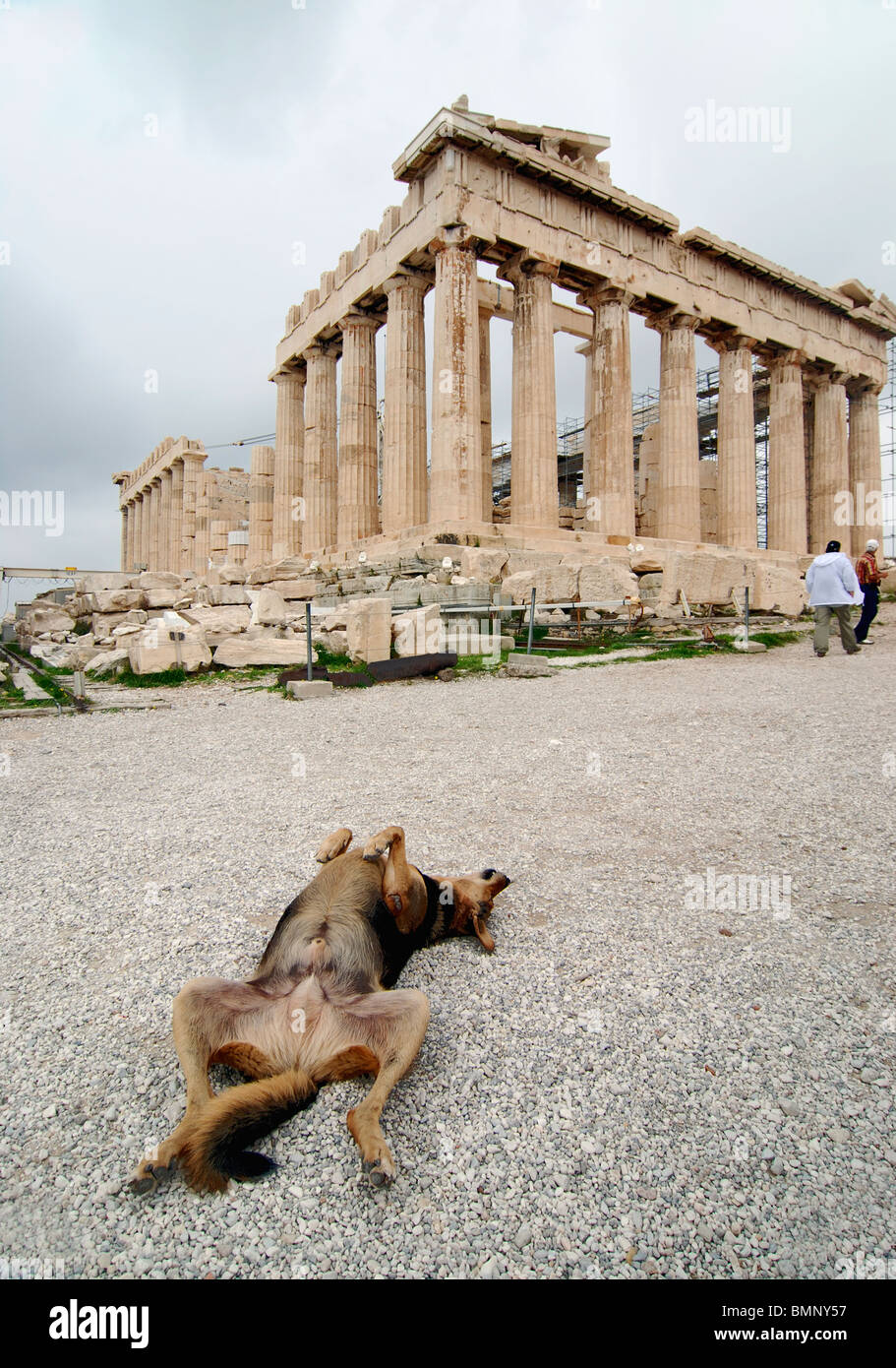 Stray dog enjoying itself in front of Acropolis, Athens, Greece - Stock Image