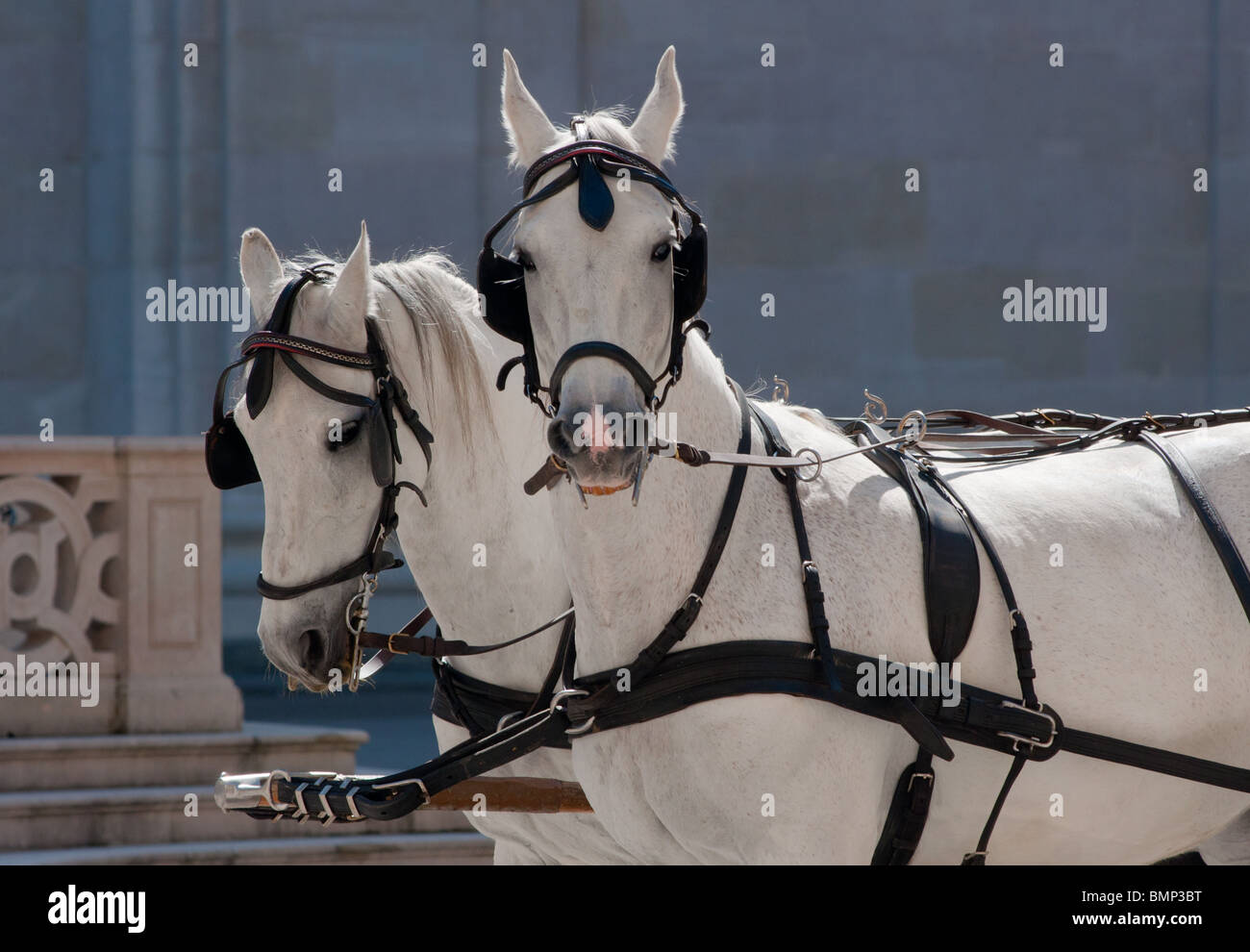 Traditional horse drawn carriages in Salzburg, Austria - Stock Image