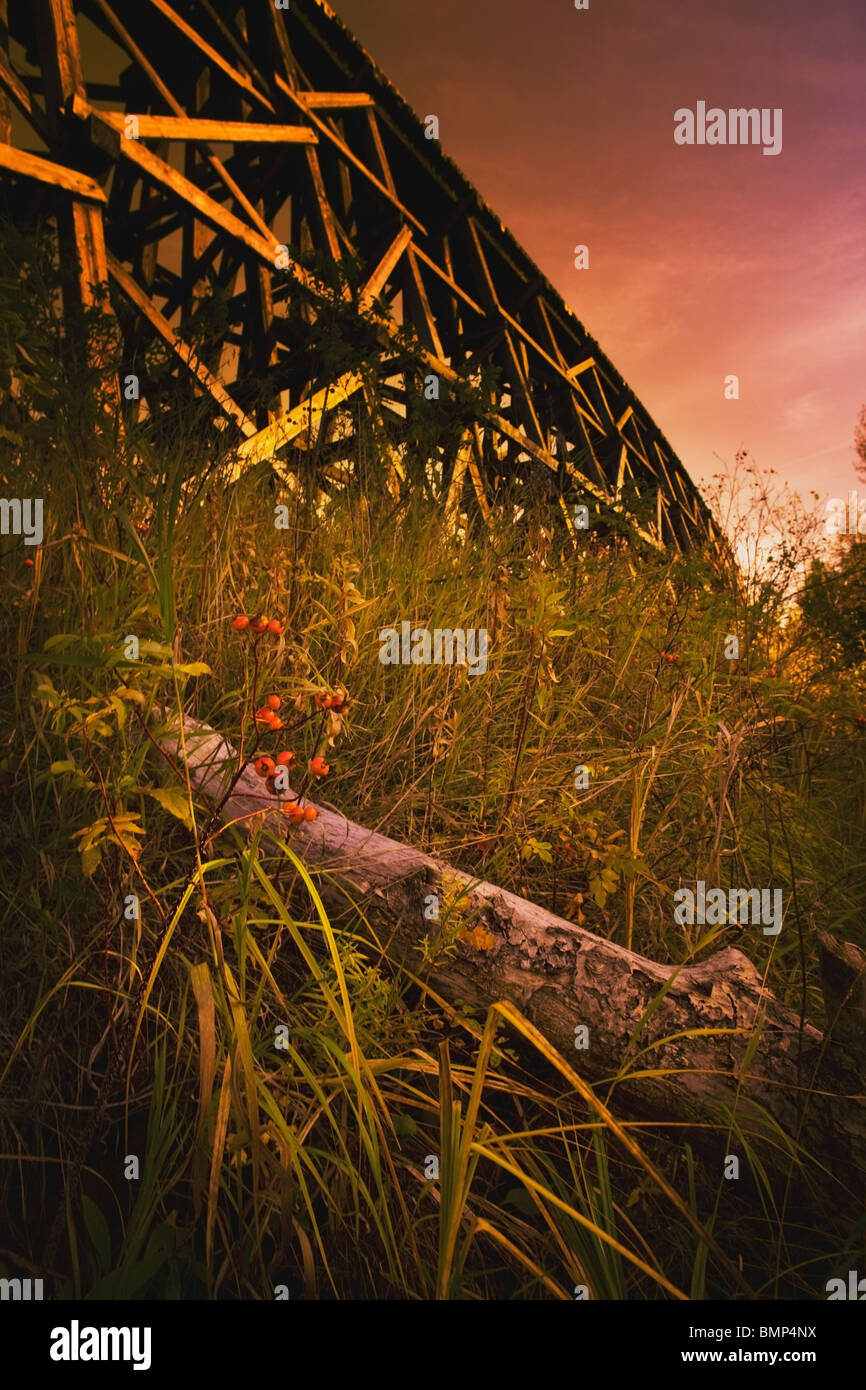 Alberta, Canada; A Train Trestle Viewed From A Low Angle In The Long Grass - Stock Image