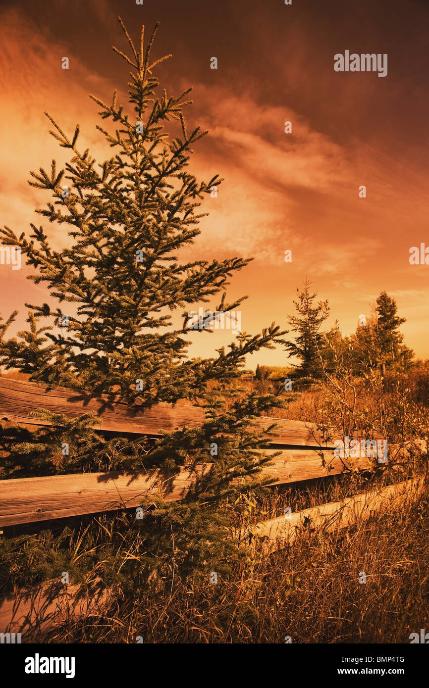 Alberta, Canada; An Old Wooden Fence With Overgrown Grass And Trees - Stock Image