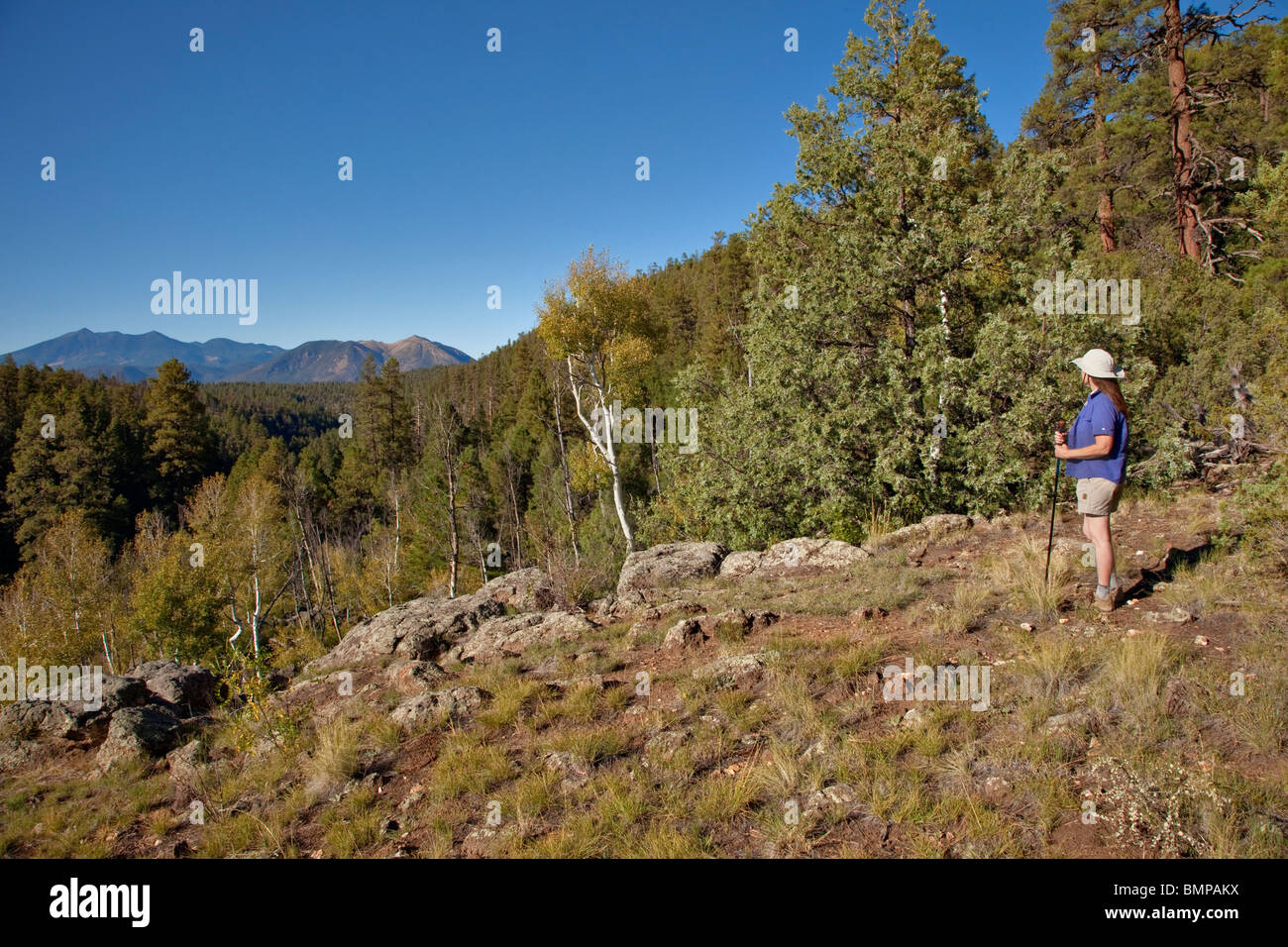 Hiker pauses along Arizona National Scenic Trail on Anderson Mesa, San Francisco Peaks in distance, Flagstaff, Arizona, - Stock Image
