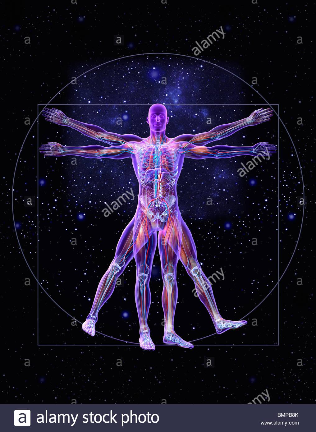 Vitruvian man - Stock Image