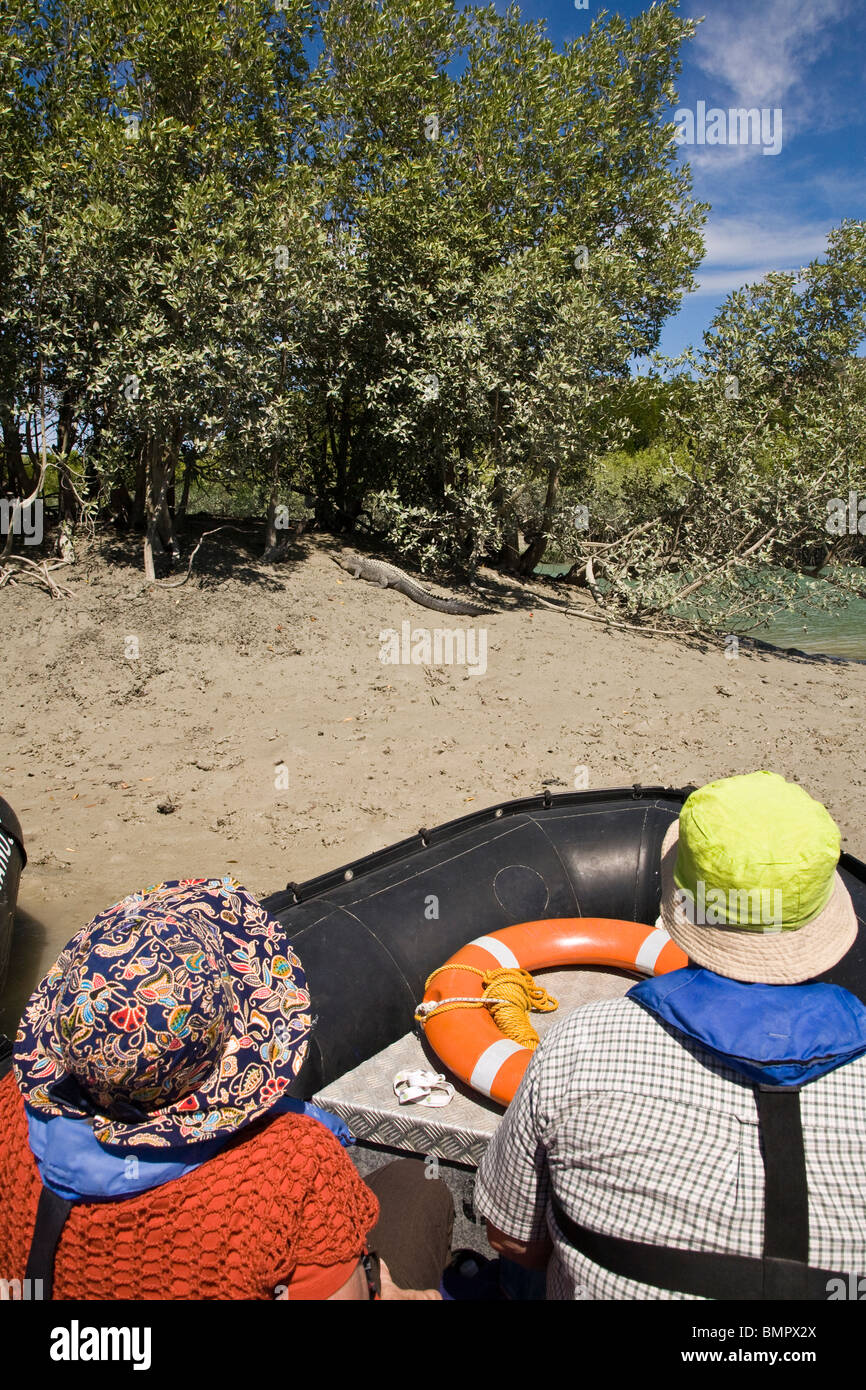 Passengers from the Aussie expedition cruiser Orion catch a glimpse of a stealthy salt water crocodile - Stock Image